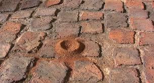 pesky paver ants