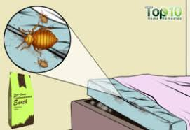 How To Avoid Bed Bugs How To Get Rid Of Bed Bug Bites Top 10 Home Remedies