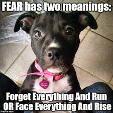Pitbull Puppy Meme - fear imgflip