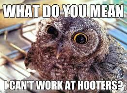 Owl Memes - 20 hilariously adorable owl memes