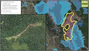 Amazon Rainforest Map Cattle Driving Big Forest Loss In Peru U0027s U0027under Appreciated