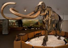 tar fossils history la brea tar pits los angeles