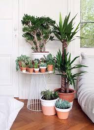 15 indoor garden ideas to make your home diy home decor