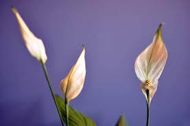 14 low light house plants for your indoors indoor plants expert