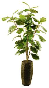 Fiddle Leaf Fig Tree Care by Fiddle Leaf Fig Tree Scalloped Basket With Spanish Moss