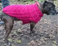 basic knitted dog sweater pattern