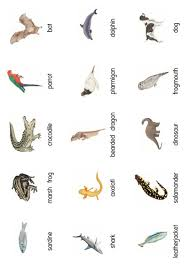 classification of vertebrates card sort by tafkam teaching