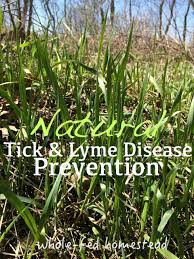 Ticks In Backyard Natural Tick U0026 Lyme Disease Prevention Whole Fed Homestead