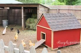 raising backyard chickens stacy risenmay