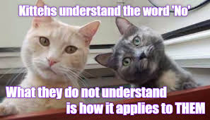 Say What Meme - say what lolcats lol cat memes funny cats funny cat