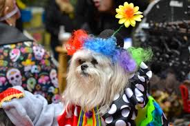 Costume Party Wikipedia by File 2015 Hallowenn Dog Costume Party 1 Jpg Wikimedia Commons
