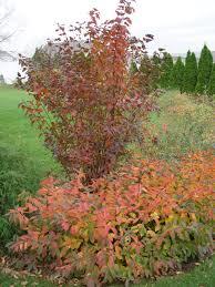 fall foliage for the yard garden housecalls