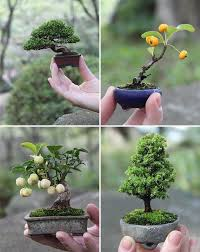 25 trending mini bonsai ideas on bonsai for sale