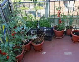 apartment garden how to grow gardens you can totally grow in your