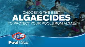 how to protect your pool from algae blooms clorox pool u0026spa