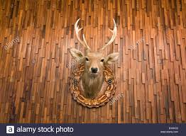 stuffed and mounted trophy deer stag on wooden wall hokkaido