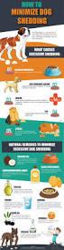 best 25 dog shedding remedies ideas on pinterest dog shedding