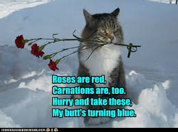 Grumpy Cat Snow Meme - grumpy cat s boyfriend lolcats lol cat memes funny cats