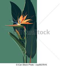 bird of paradise flower strelitzia bird of paradise flower clip vector search
