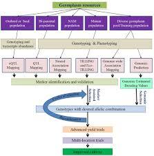 frontiers toward genomics based breeding in c3 cool season