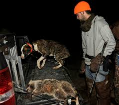 Cheap Coon Hunting Lights Hardwoods And Half Pipes The Skateboarding Raccoon Hunter