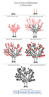 cherry blossom tree facts how to draw a cherry tree