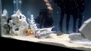 wars cichlid fish tank