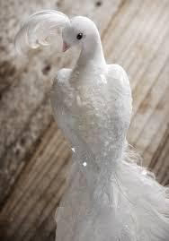 20 best images on white doves bird