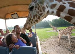 Six Flags Zoo Top Mid Atlantic Amusement Parks And Water Parks For Student Groups