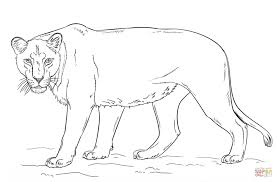 lion coloring pages majestic wild animal printable pictures