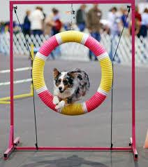 australian shepherd 2015 calendar australian shepherd dog information for owners