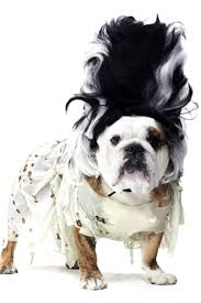 dog halloween party ideas 17 best dog halloween costumes images on pinterest cutest dogs