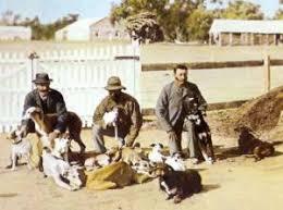 affenpinscher jakt tenterfield terrier janedogs