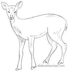 easy outlines of animals animal drawings