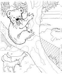 11 koala bears coloring pages koala coloring pages koala
