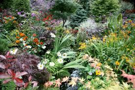 perennial flower garden ideas photograph beautiful bulbs u0026
