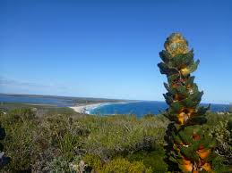 australian native plants for rock gardens video and photos australian native shrubs gardening with angus