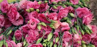 farm fresh flowers organic flower csa n fresh flowers