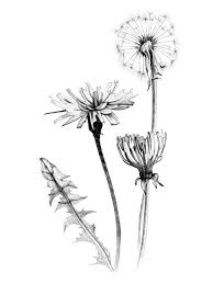 ähnliches foto art paper pinterest dandelions tattoo and