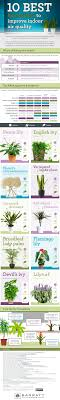 best plants for air quality top 10 house plants for clean indoor air the healthy home economist
