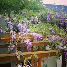 sunny simple life cottage garden ideas