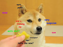 Wow Dog Meme - do not want doge know your meme