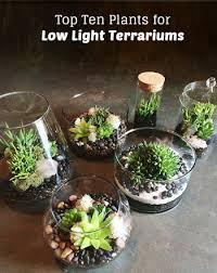 Low Light Indoor Flowers Top Ten Low Light Terrarium Plants Low Lights Terraria And Plants