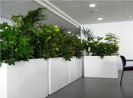 Large Indoor Plants Large Indoor Plant Pot 12 Cool Ideas For Tall House Plants For