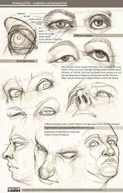 Parts Of The Face Anatomy Drawing Eyes Anatomy And Perspective By Greyfin Deviantart Com