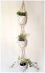 kommode yunnan 54 besten pflanzen bilder auf pinterest saftig zimmerpflanzen