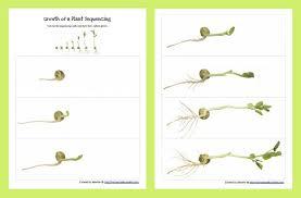 garden lesson plans pdf