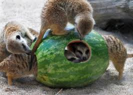 plan your visit woodland park zoo seattle wa