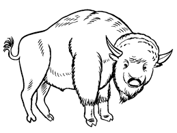 endangered species coloring pages free printable bison coloring pages for kids