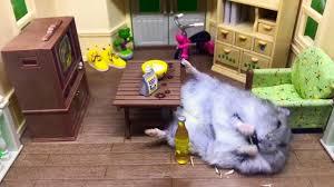 santa hamster munches on sunflower seeds jukin media